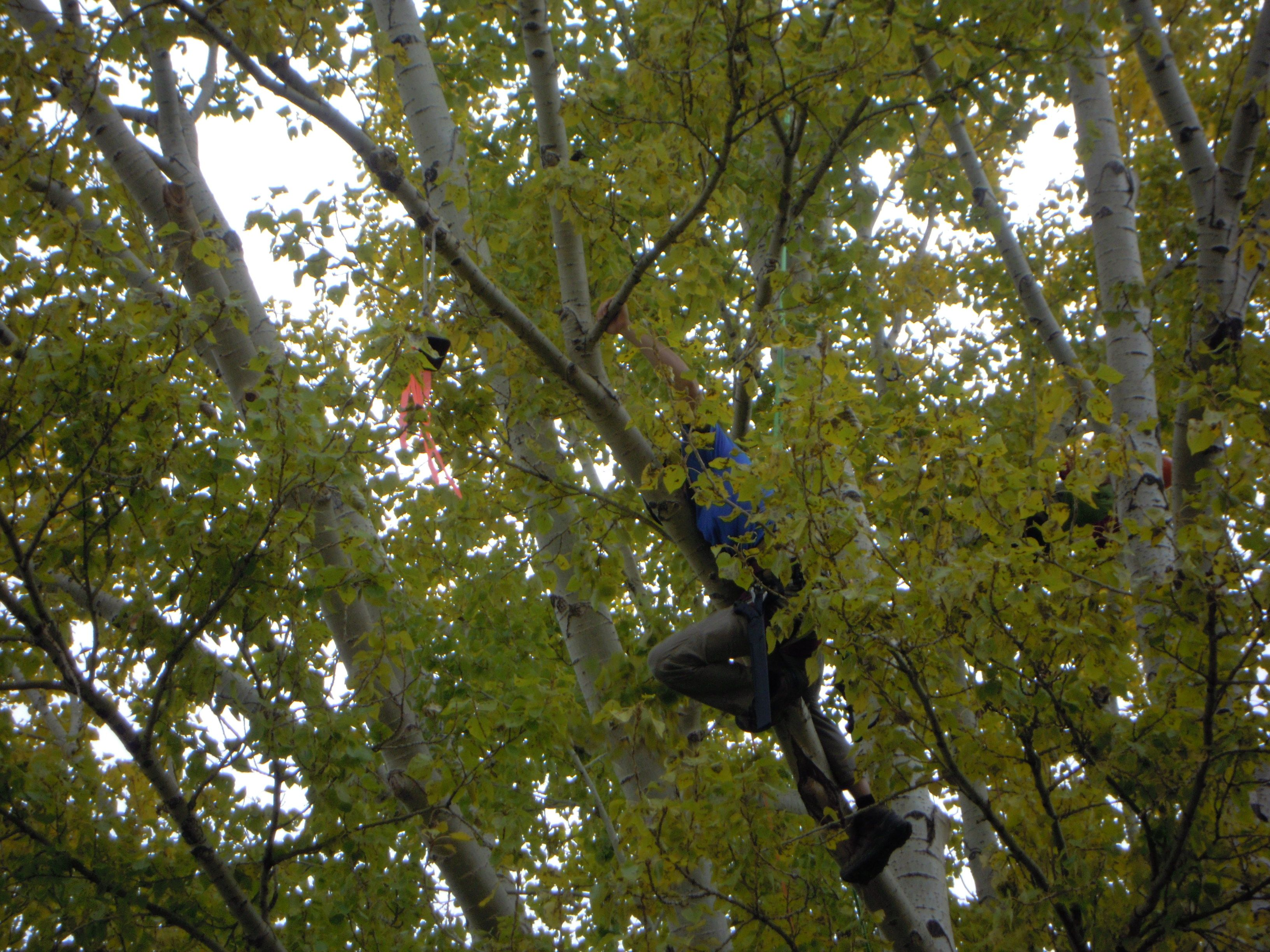 isa arborist certification study guide pdf